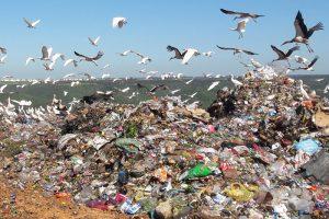 Landfill. organic waste.