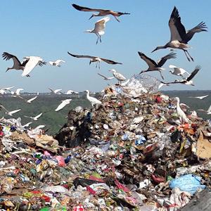 déchets sur décharges.
