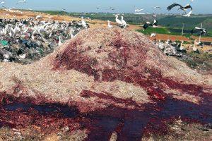 organics on landfill.